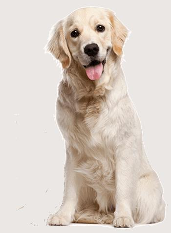 dog-no-pussy
